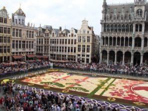 350 květinový koberec na náměstí (4)