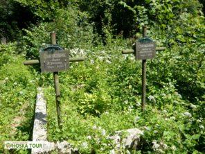 Hřbitov pod zříceninou hradu Chust
