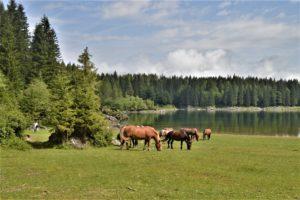 Koně u Laghi di Fusine