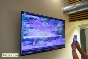 Šmírovací kamera na vlky