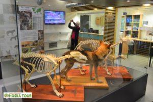 Expozice v návštěvnickém centru