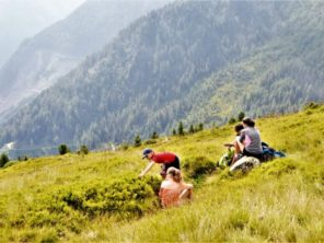 Borůvky na vrcholu Roßfeld