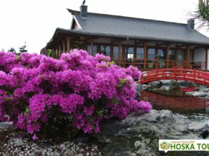 Japonská zahrada Pisarzowice