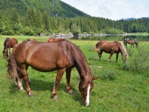 Koně u jezera Laghi di Fusine