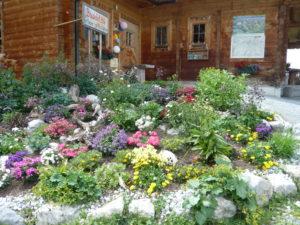 alpská květena na skalce